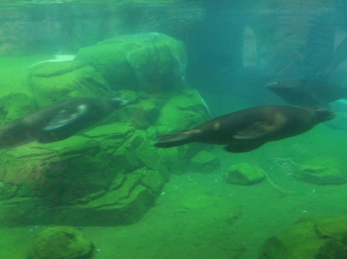 these sea lions fascinated me so much, and my accompanying friend was fascinated by my fascination